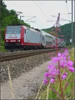 Verschiedenes/4270/lok-4019-mit-dostos-durch-die Lok 4019 mit Dostos durch die Blume fotografiert am 06.07.08 (Jeanny)