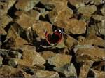 Insekten/4271/ein-schmetterling-fotografiert-im-schotter-neben Ein Schmetterling fotografiert im Schotter neben den Gleisen am 14.09.08. (Hans)